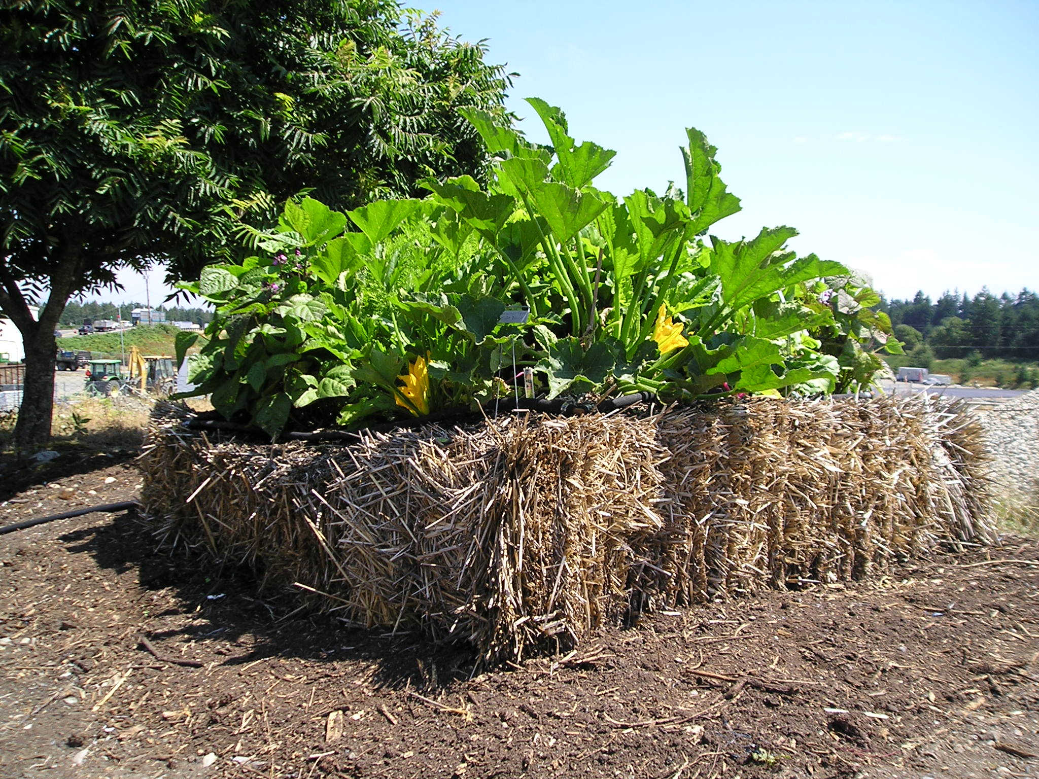 A Strawbale Garden At ...