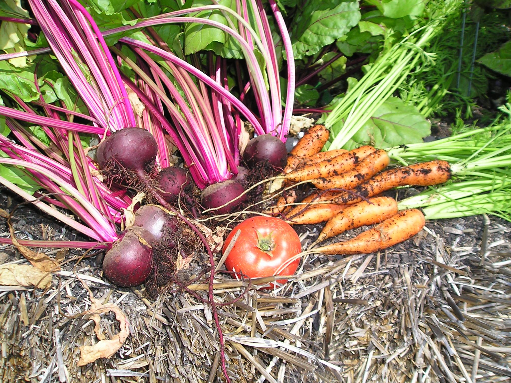 The last straw bale garden wsu master gardener program for Closed loop gardening